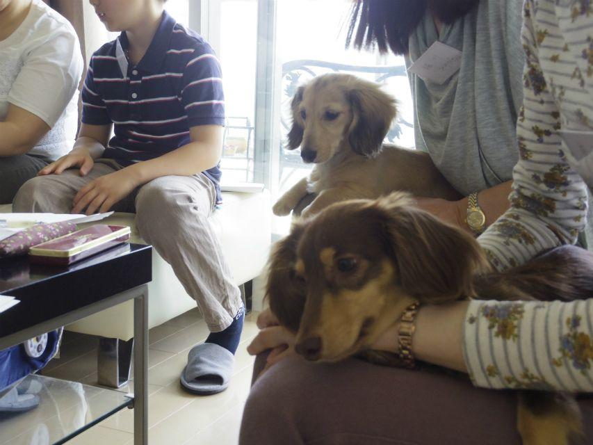 自宅でできるしつけ&ハンドリングセミナー(2013.5.18)東京教室