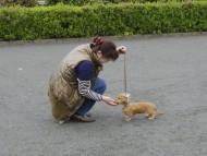 自宅でできるしつけ&ハンドリングセミナー(2013.4.21)富士宮教室