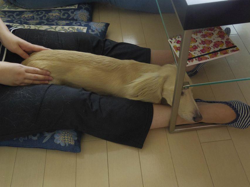ドッグアロマセミナー 東京