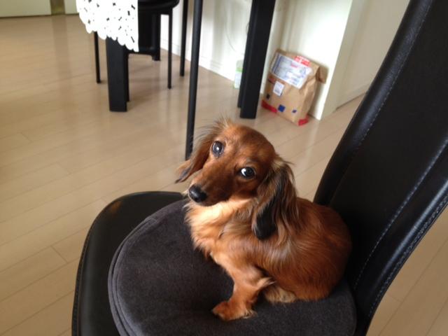 愛犬のためのアロママッサージ講座 6月23日 東京
