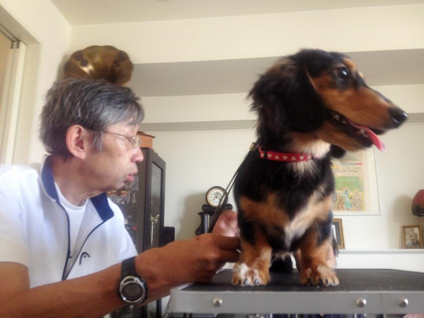 自宅でできるしつけ&ハンドリングセミナー(2013.7.7)東京教室