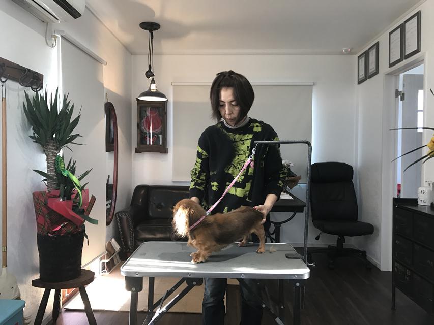 トリマー 鈴木千代美