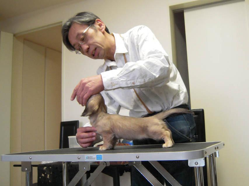 自宅でできるしつけ&ハンドリングセミナー(2013.3.10)東京教室