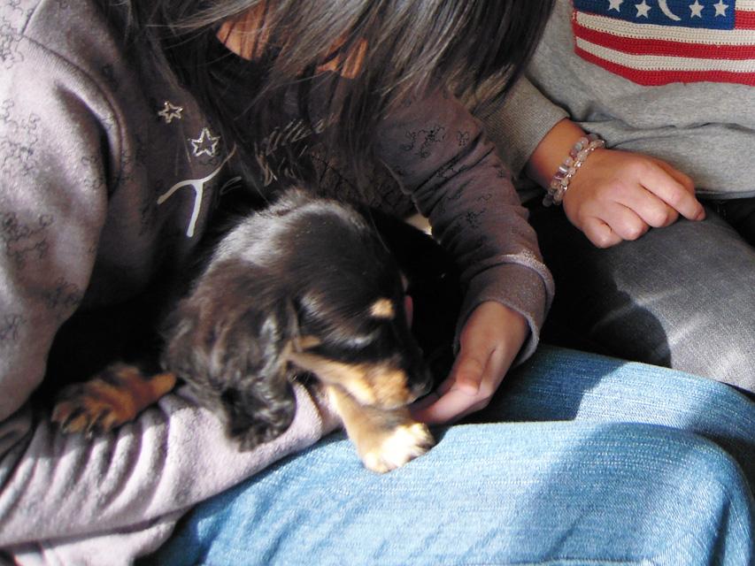 愛犬のためのアロマ&ドッグマッサージセミナー(2013.2.9) 東京教室