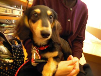 愛犬のためのアロママッサージ教室(2012.3.25)富士宮教室