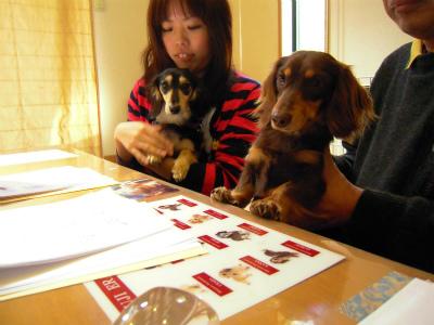 愛犬のためのアロママッサージ講座(2012.4.1)富士宮教室