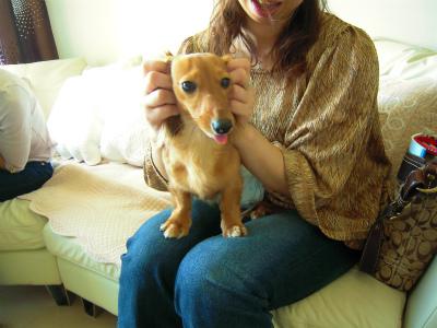 愛犬のためのアロママッサージ講座