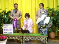 【ドッグショー】神奈川北ダックスフンドクラブ展 ソフィア パピークイーン