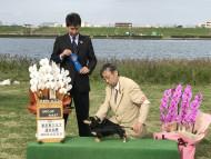 【ドッグショー】ミルカちゃん グループファースト受賞
