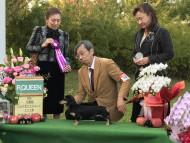 【ドッグショー】ミルカちゃん パピー牝リザーブクイーン受賞