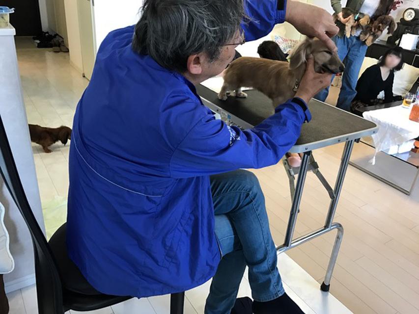 自宅でできる「しつけ&ハンドリング講習」東京教室(港区田町)2017年4月23日