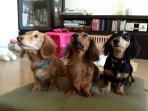 愛犬のためのアロママッサージ講座 東京教室