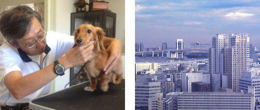自宅でできる「しつけ&ハンドリング講習」東京教室