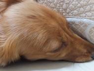 愛犬のためのアロマ&ドッグマッサージセミナー(2013.5.25) 東京教室