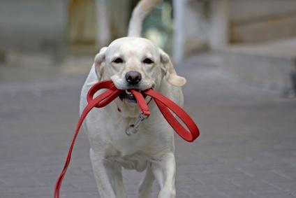 happy dog running in the street
